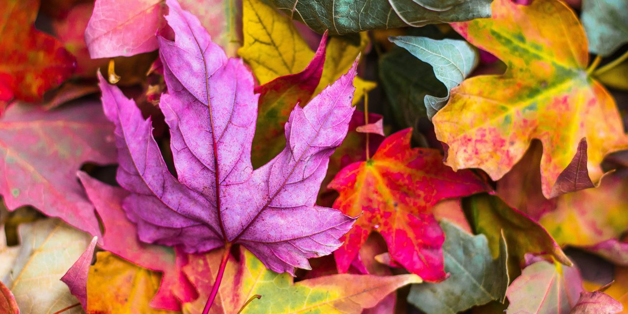 Fall Leaf Pickup 10/16 – 11/26