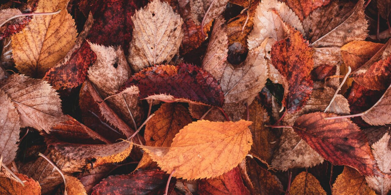 Fall Leaf Pick Up   Oct 11 – Nov 18